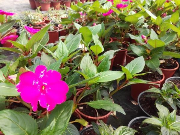 Pembe Çiçek 02